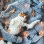 Cat on Sweater