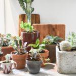 how to move houseplants