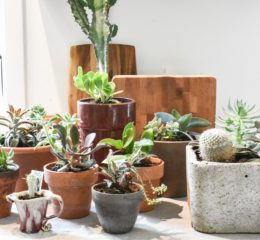 How to Move Your House Plants